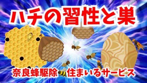 奈良県のミツバチ、アシナガバチ、スズメバチでお困りの方へ!蜂の習性と巣について