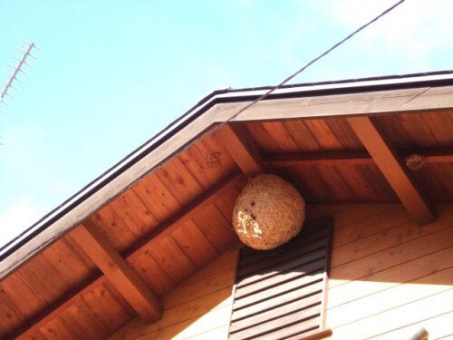 屋根付近にいたスズメバチ駆除のご依頼