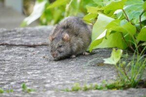 ネズミ駆除奈良県家のリフォーム工務店住まいるサービス